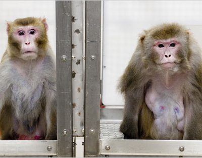 Monkey see…monkey do?