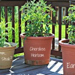Garden 2012 & Weekly Menu