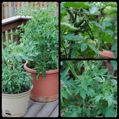 Garden Update & Weekly Menu