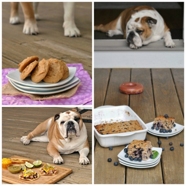 food blogging with a dog collage 2